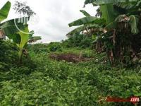 One plot of Land to sell at Rukpuokwu